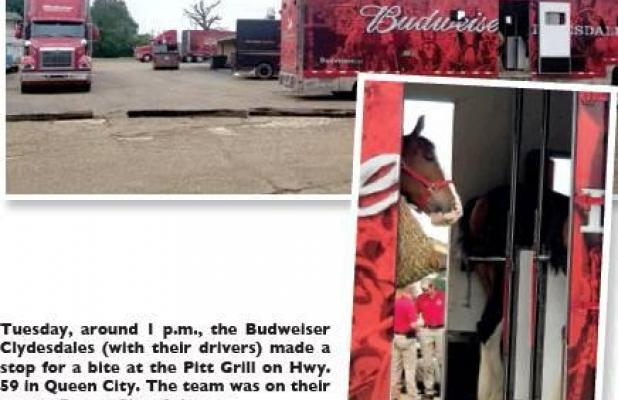 Budweiser Clydesdales make 'Pitt' stop in QC