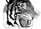 Bynum lifts Tigers to win over Cardinals on sideline trey